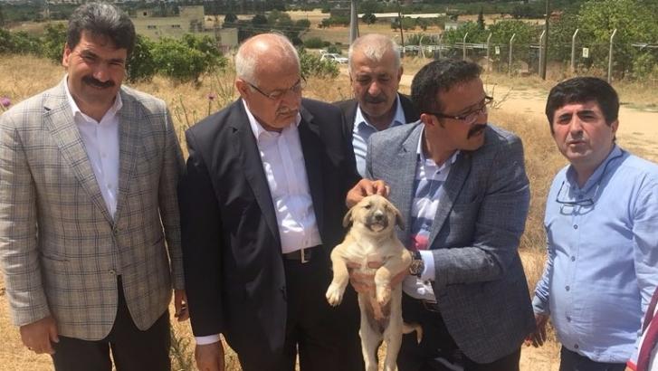 Milletvekili Erdoğan'dan hayvan dostlarına müjde