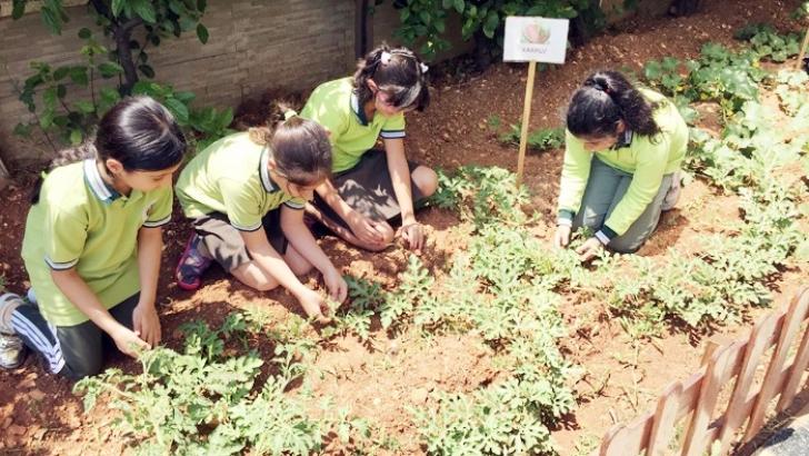 Okul bahçesinde organik sebze ve meyve üretiyorlar
