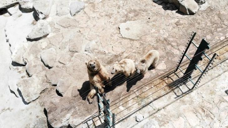 İlk defa drone gören ayılar böyle görüntülendi
