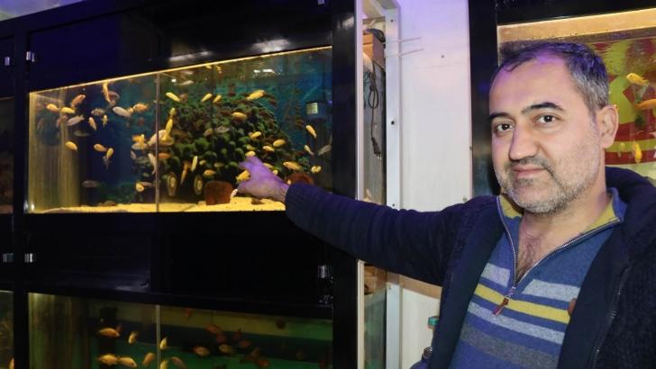 Süs balıklarına ilgi artıyor