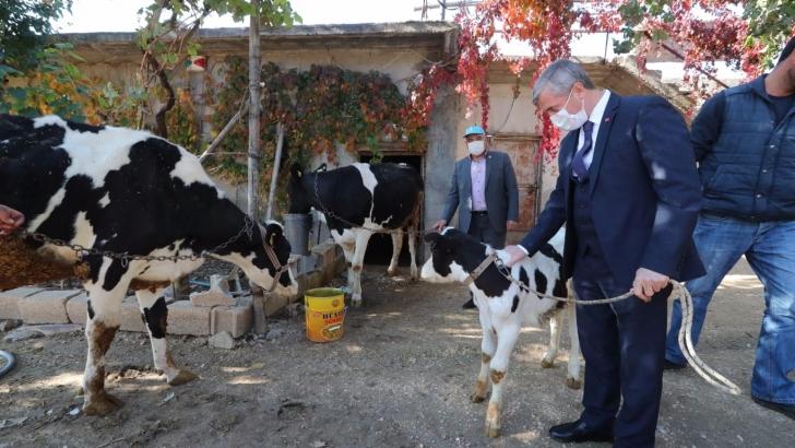 Şahinbey Belediyesi hayvan yetiştiricilerini destekliyor