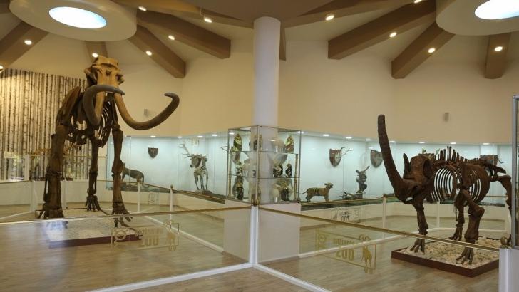 Türkiye'nin ilk ve tek zooloji ve doğa müzesi açılıyor