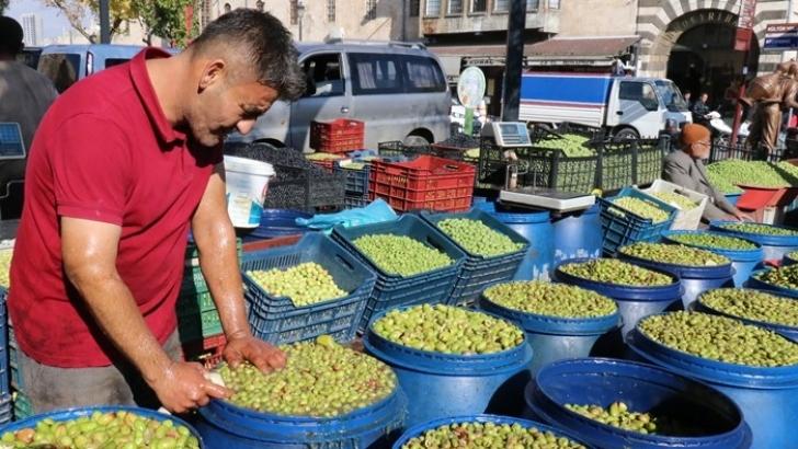 Yağışlar zeytin fiyatlarını artırdı